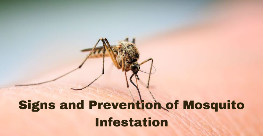 Signs and Prevention of Mosquito Infestation
