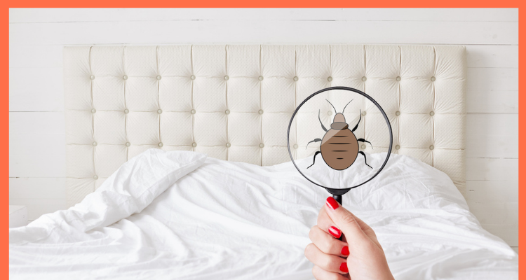 How can one Get Rid of Bedbugs Prior to Shifting?