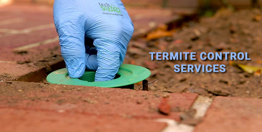 How Termites form Colonies in your Property and What to Do About it?