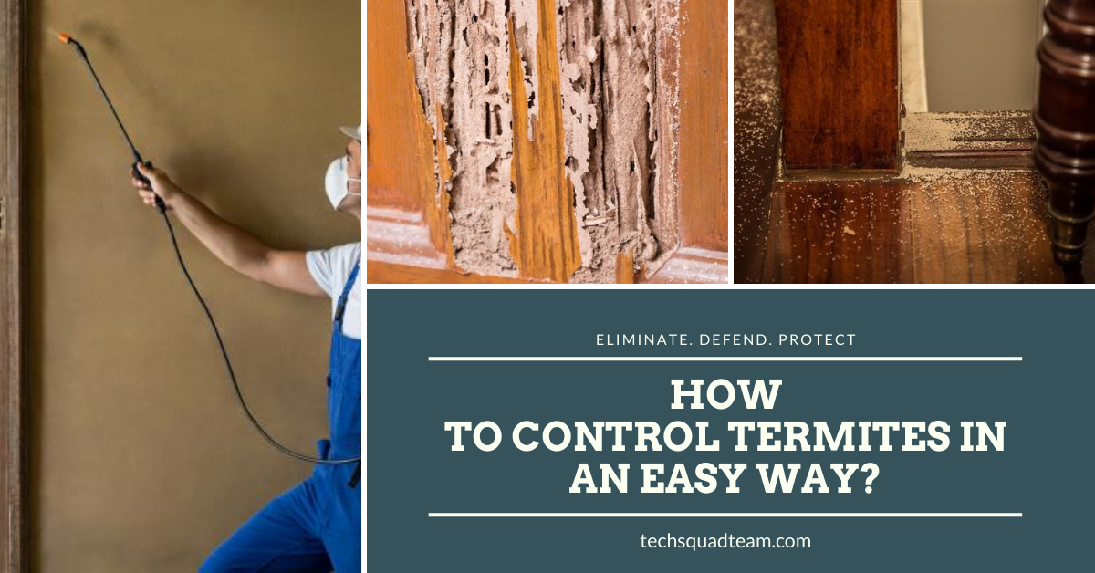 How to Control Termites in an Easy Way?