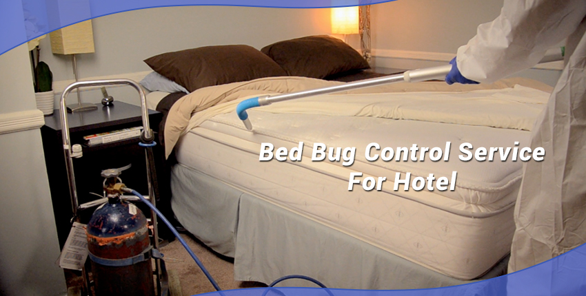 What to do when encountered with Bed bugs at Hotels?