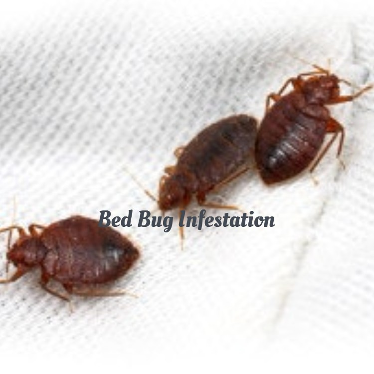 4 Signs that Indicates a Bed Bug Infestation / Techsquad Team