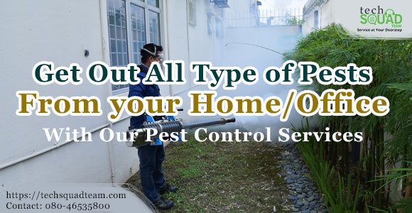 A to Z tips and tricks to get rid of pests at home