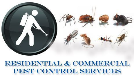 3 Types of Pests Found in Residential and Commercial Setting