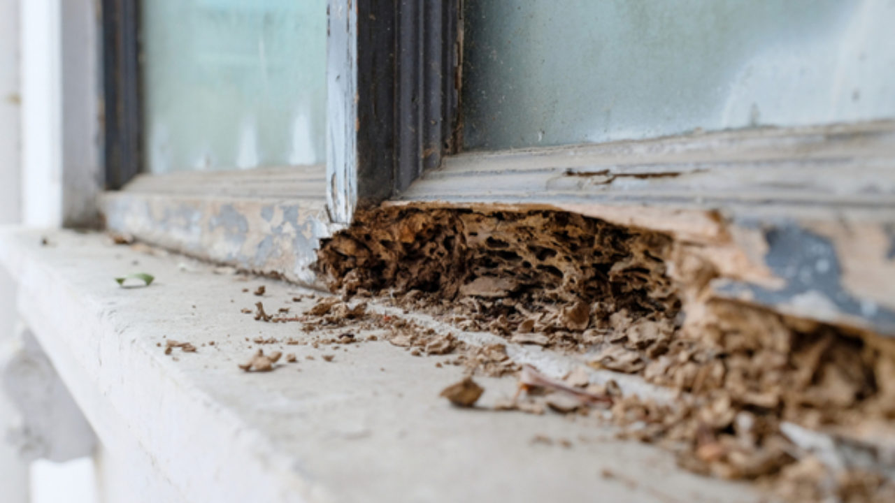 What are The Signs of Termite Infestation?