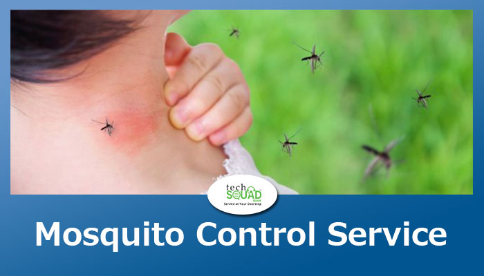 5 things to do immediately after Mosquito Pest Control