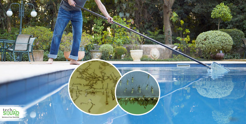 How to keep mosquitoes away from your swimming pool