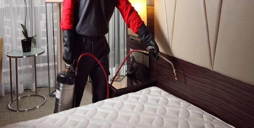 What Are The Bedbugs Symptoms And Their Treatment?