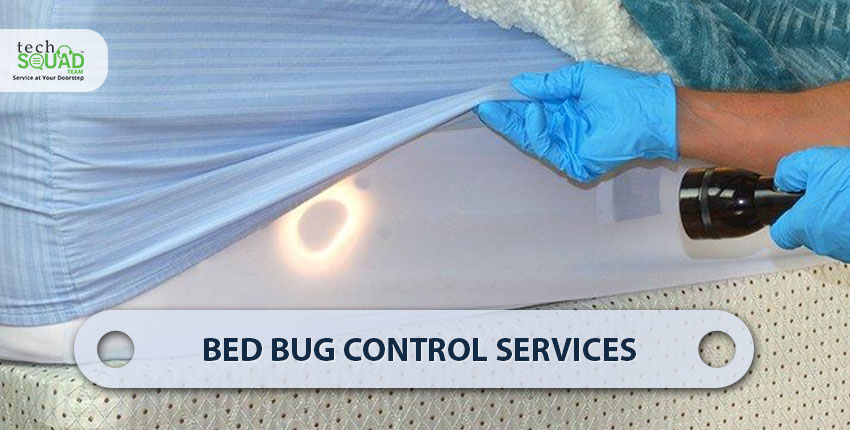 5 Ways to get rid of Bed Bugs from your Home Permanently