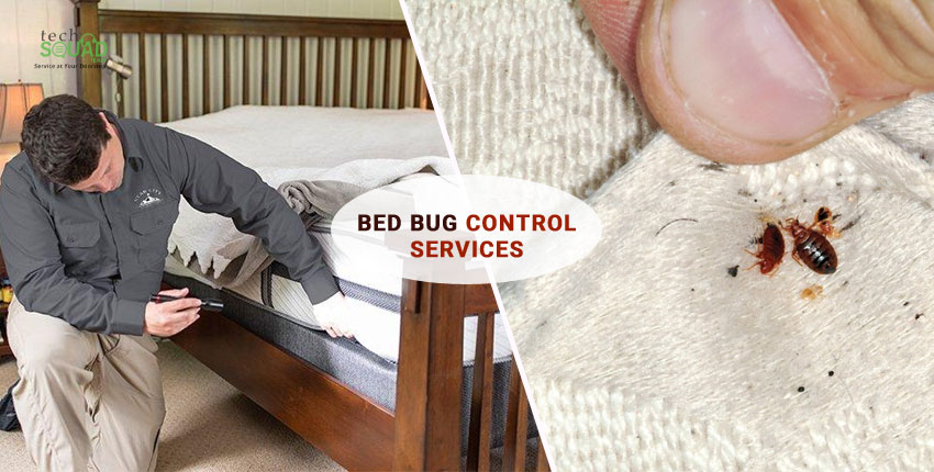 How does Bed Bugs get Introduced Into your Home?