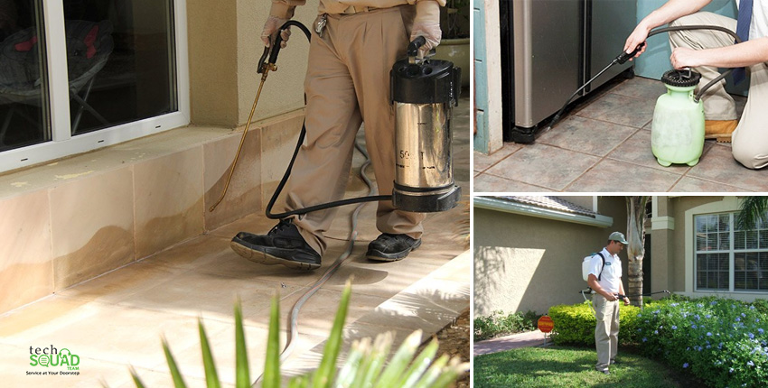 Why to Opt For Herbal Pest Control Over Chemical Pest Control?
