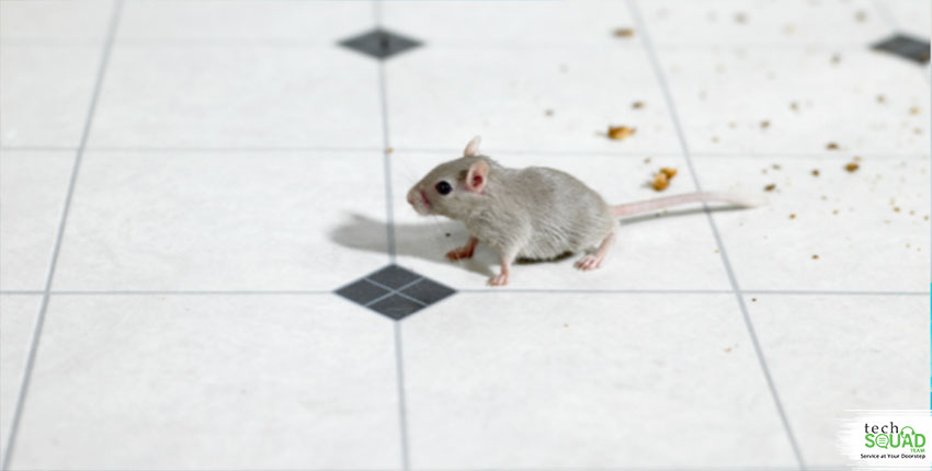 How To Get Rid Of Mice In An Apartment