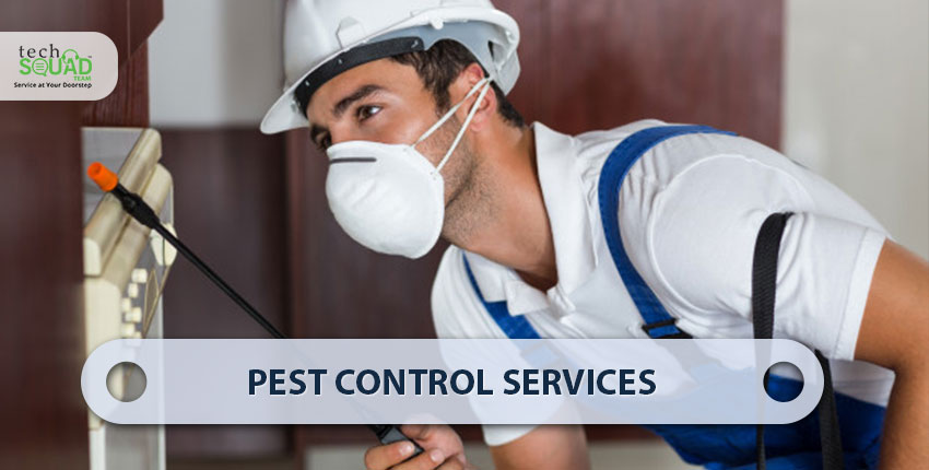 Do it Yourself  VS Professional Pest Control. Which is a Better Option and Why?