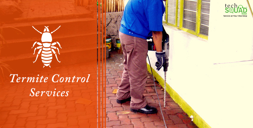 Few Common Facts and Fictions about Termite Control