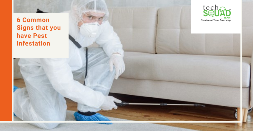 6 Common Signs that you have Pest Infestation