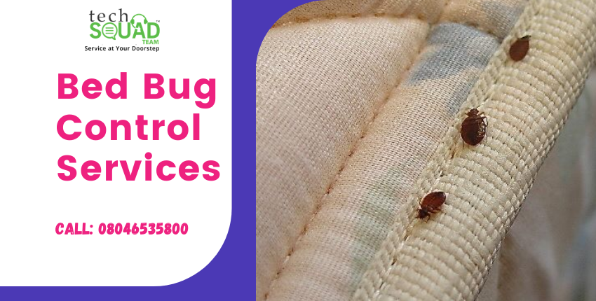 What are the Signs of Bed Bug Pest Infestation?