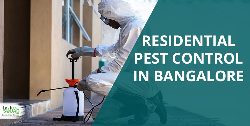 How Do Pests Reduce The Value Of Your Property