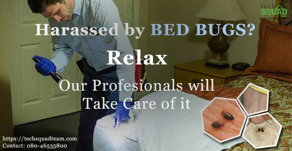 Why hire a Professional Bed Bug Pest Control Service in Bangalore?