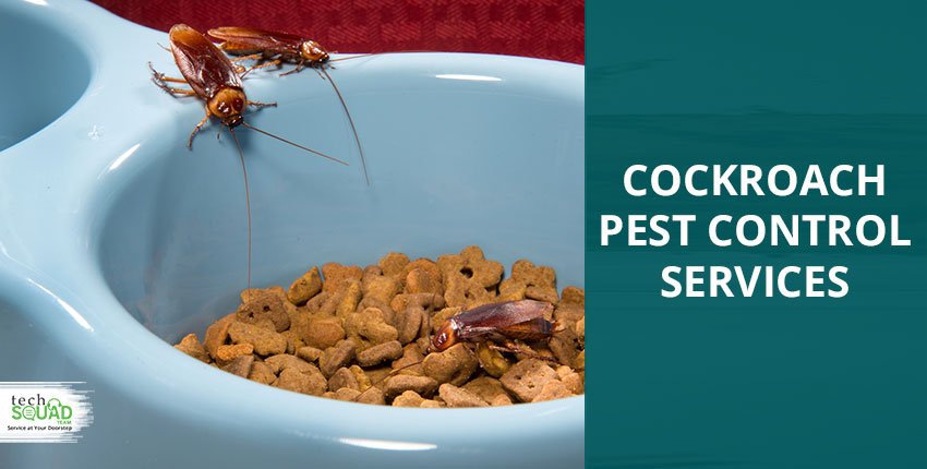 10 Different Ways to Starve Out the Cockroaches