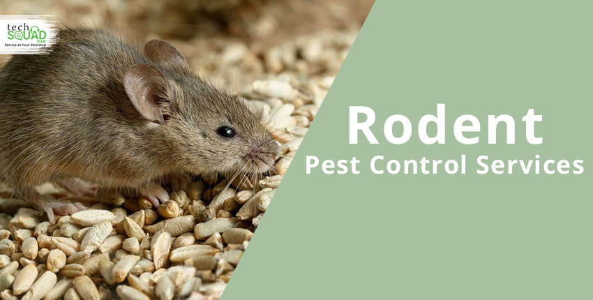 Some Common Signs Of Rodents Infestation