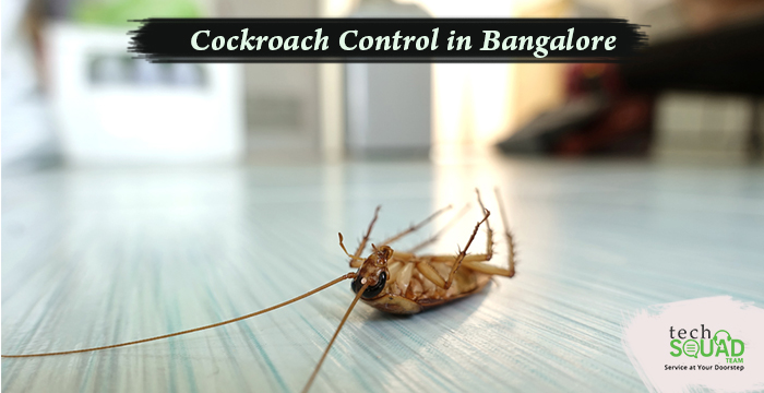 Understanding the Cockroach in a Better Way