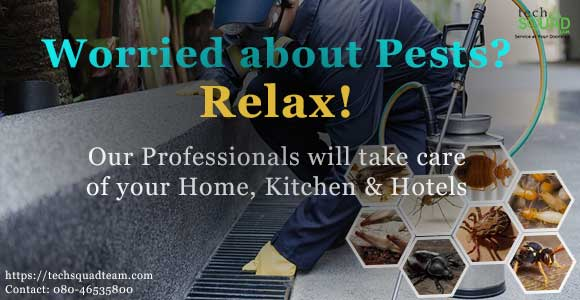 Reliable Pest Control Services in Bangalore