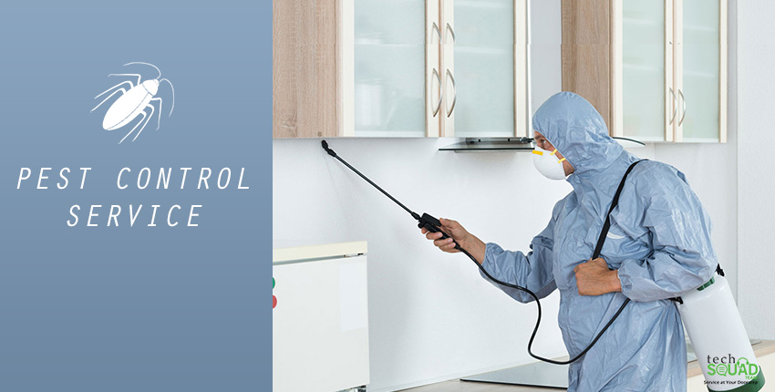 Why do you need Pest Control Services?