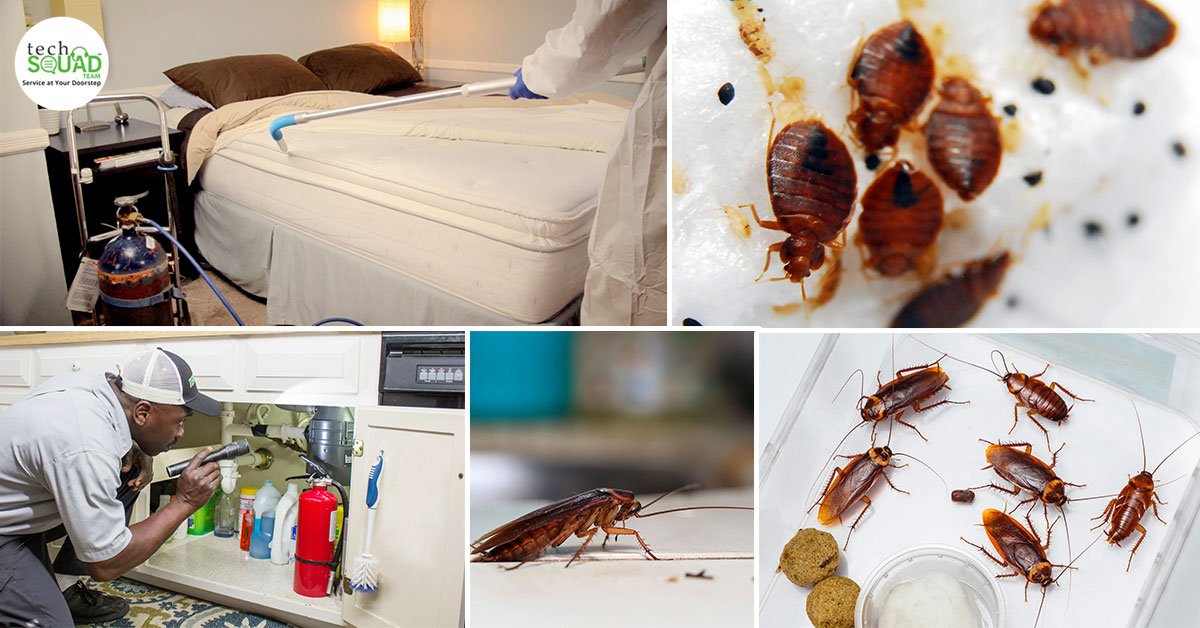 Insect-Proofing Your Home Has Never Been Easier