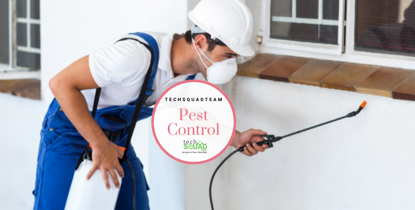 Enjoy a Healthy Life with Pest Control Services in Hyderabad