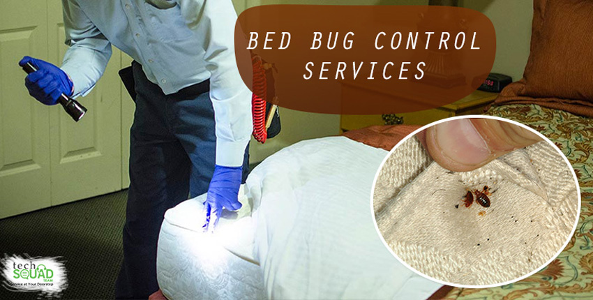 An Introduction to the Blood Sucking Bed Bug