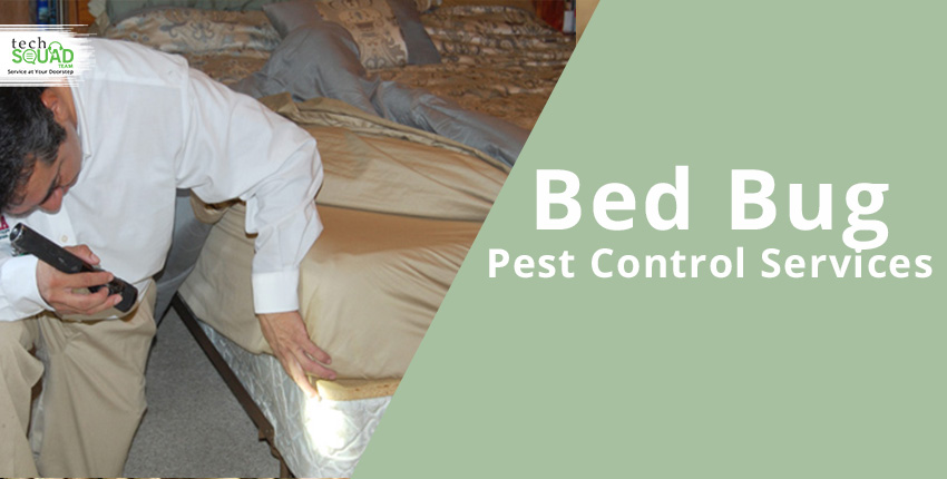 What Is Bedbug Control And Removal Service In Bangalore