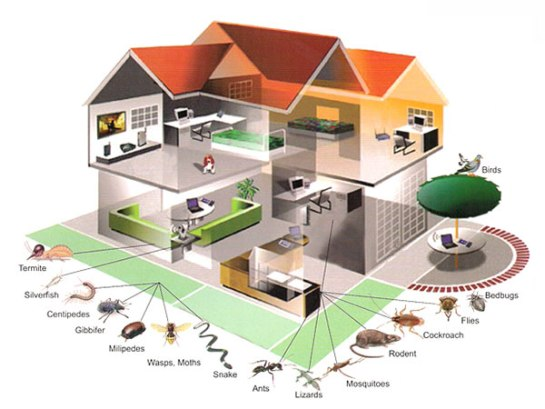 How to Prevent Cockroach Infestations from your Home?-Tech Squad Team