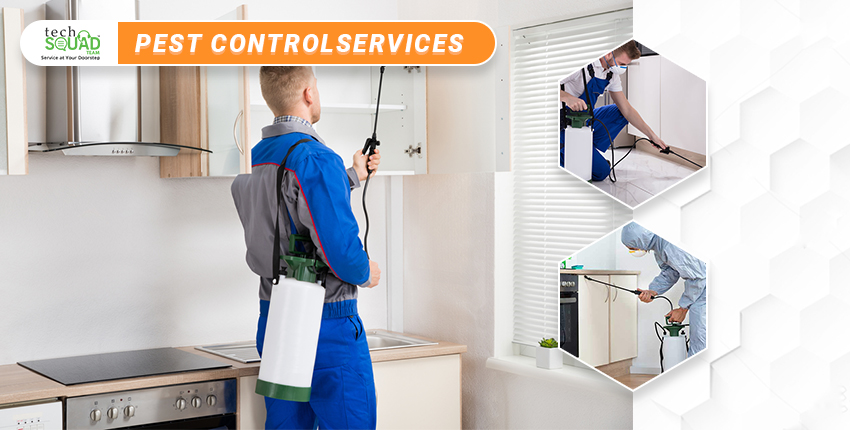 Top Reasons Why Pest Control Services are Important?
