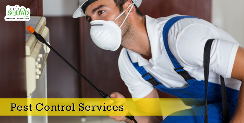 Try and Avoid these Mistakes while Doing Pest Control