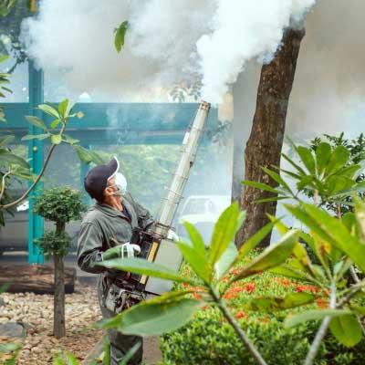 Dengue Pest Control