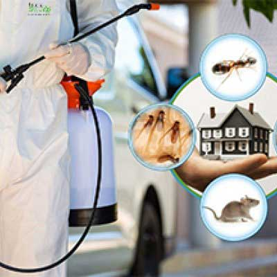 Cleaning & Pest Control & Painting Combo Service